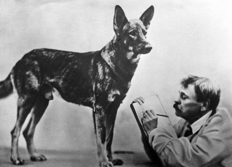 Merited Artist of the Russian SFSR Vladimir Durov watching a dog during an experiment